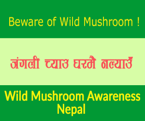 Wild Mushroom Awareness Advertisement